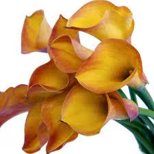 yellow calla calla flower