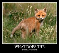 What Did The Fox Say Meme - memebase what does the fox say all your memes in our base