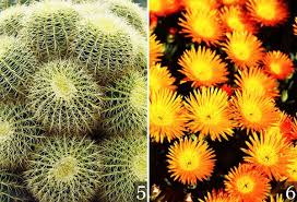 Succulent And Cacti Pictures Gallery Garden Design Desert Garden Succulents U0026 Cacti Gallery Garden Design