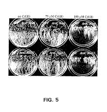patent us7700827 metal resistant plants and phytoremediation of