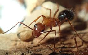 ants discover inner junkie journal of experimental biology