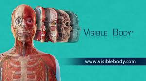 Anatomy And Physiology Apps Visible Body Apps See Amazing Anatomy In 3d Youtube