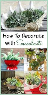 Indoor Garden Containers - succulent container ideas for your home gardens container