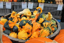 whole foods thanksgiving hours open file cucurbita pepo ornamental gourds 14 autumn wholefoods 1440p