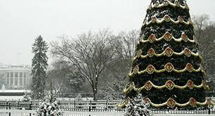 christmas tree pic event history timeline national christmas tree lighting