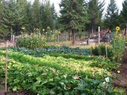 344 how to have a successful vegetable garden gardening tips