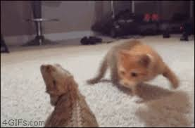 Scared Cat Meme - scared cat gifs get the best gif on giphy