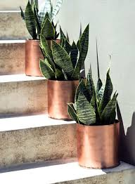 plants that grow in dark rooms indoor plants for dark rooms these are so easy to take care of