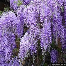 ornamental plants australia