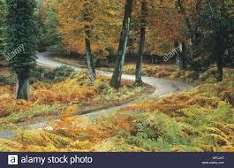 road through the autumnal bolderwood ornamental drive near stock