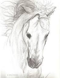 horse drawings in pencil mcconnell u203a portfolio u203a running