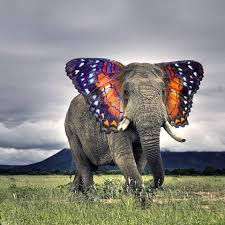 psbattle an elephant with ears painted like a butterfly