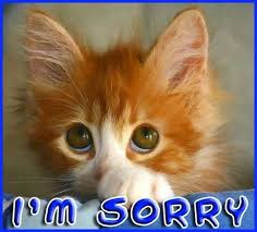 Sad Kitten Meme - i m sorry kitten meme generator