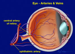 Can Stroke Cause Blindness What Is An Eye Stroke Causes Symptoms And Treatment
