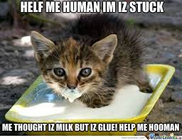 Crazy Cat Memes - crazy cat stucked in glue by oshi meme center
