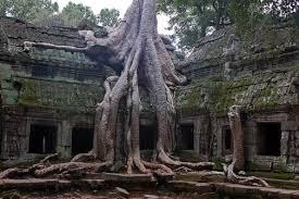 list o top ten strangest trees lop lists o plenty