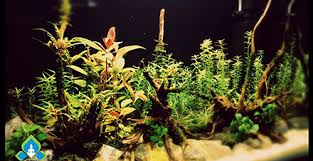 Most Beautiful Aquascapes Nature Aquarium Gallery