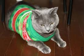 sweaters for cats cat in an cat sweater the home of cat sweaters