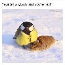 Funny Pics With Memes - 15 funny memes by tank sinatra bored panda