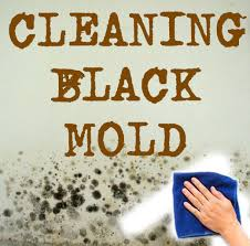 Black Mold Bathroom Cleaning Bathroom Mold Black Mold 5 Steps
