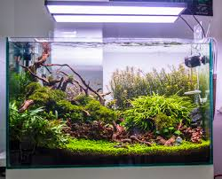 Aquascape Shop Aquadesign September 2017