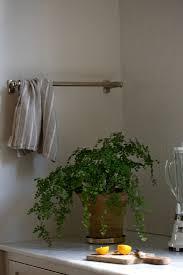 100 indoor plants low light tall indoor plants low light