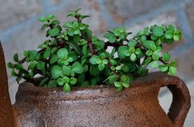 Succulent Plant Succulent Plants Foolproof