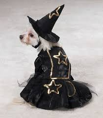 Dog Halloween Costumes 126 Funny Pet Costumes Images Animals Funny
