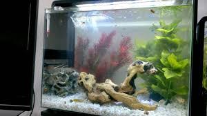 superfish home 80 aquarium youtube