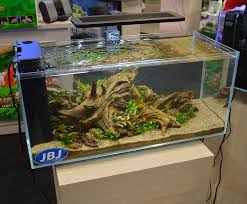 freshwater tanks of the aquatic experience 2016 part 2