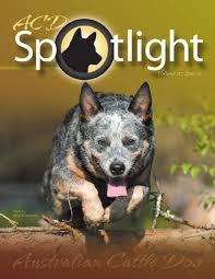 j bar w australian shepherd acd spotlight by debcasey issuu