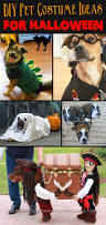 small dog witch costume 20 adorable diy pet costume ideas for halloween 2017
