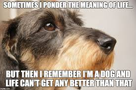 The Meaning Of Meme - 8 funny dachshund memes what every dog deserves
