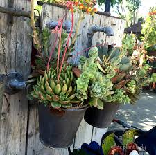 Container Water Gardens Give Water Features New Life With Succulents Ramblings From A