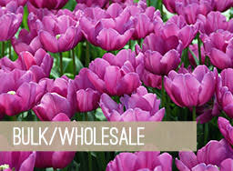 shop flowers and flower bulbs at holland bulb farms