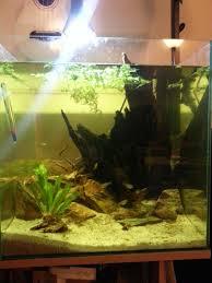 Best Substrate For Aquascaping Substrate For Planted Apisto Aquarium Apistogramma Com