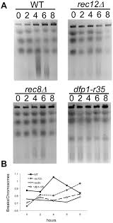 the c terminus of s pombe ddk subunit dfp1 is required for