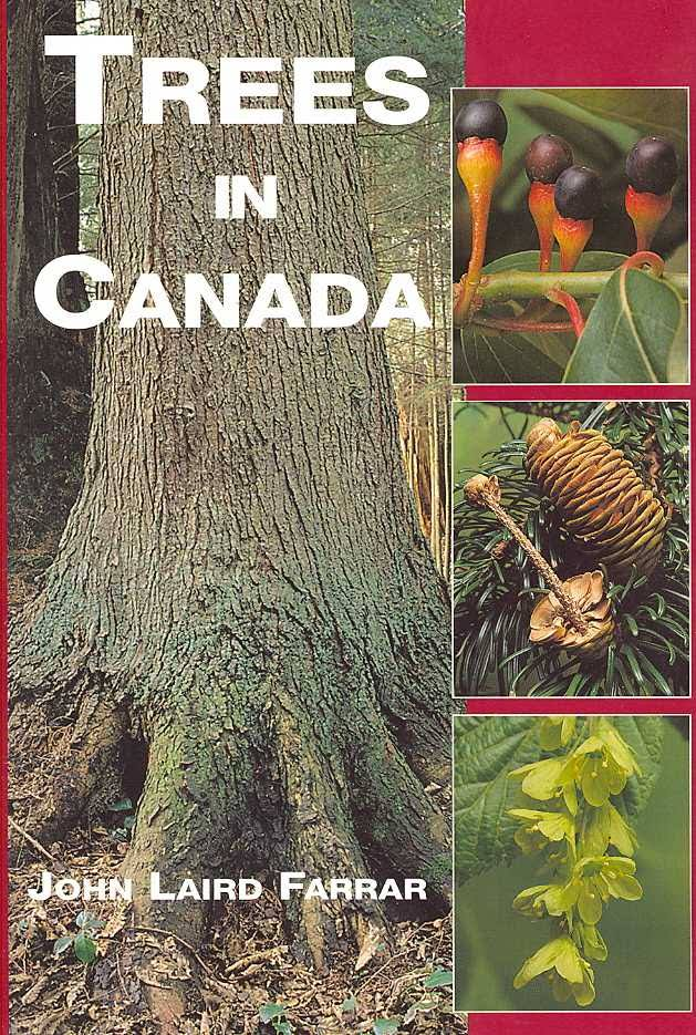 Image result for trees in canada
