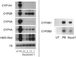 regulation of rat hepatic cytochrome p450 expression by sterol