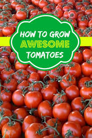 249 best growing tomatoes u0026 peppers images on pinterest veggie