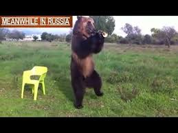 Bear On The Chair Russian Bear Shows Off His Amazing Tricks Youtube