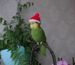 109 best knitted budgies by carol harrison images on