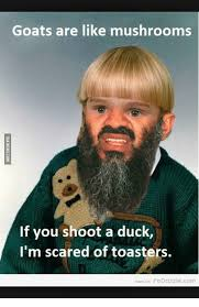 Goatse Meme - goats are like mushrooms if you shoot a duck i m scared of toasters