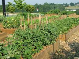soil plots and planters nc state extension publications