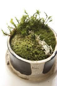 karin lidbeck a winter project creating a moss garden