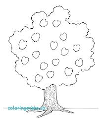 coloring pictures of a palm tree palm tree coloring amindfulgeek com