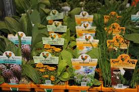 herb garden box bunnings home outdoor decoration