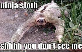Ninja Meme - sloth meme ninja sloth just slothing around