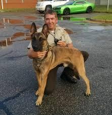 belgian shepherd houston peach county sheriff u0027s agency gets new drug tracking k9 the