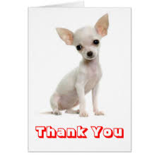 thank you chihuahua greeting cards zazzle